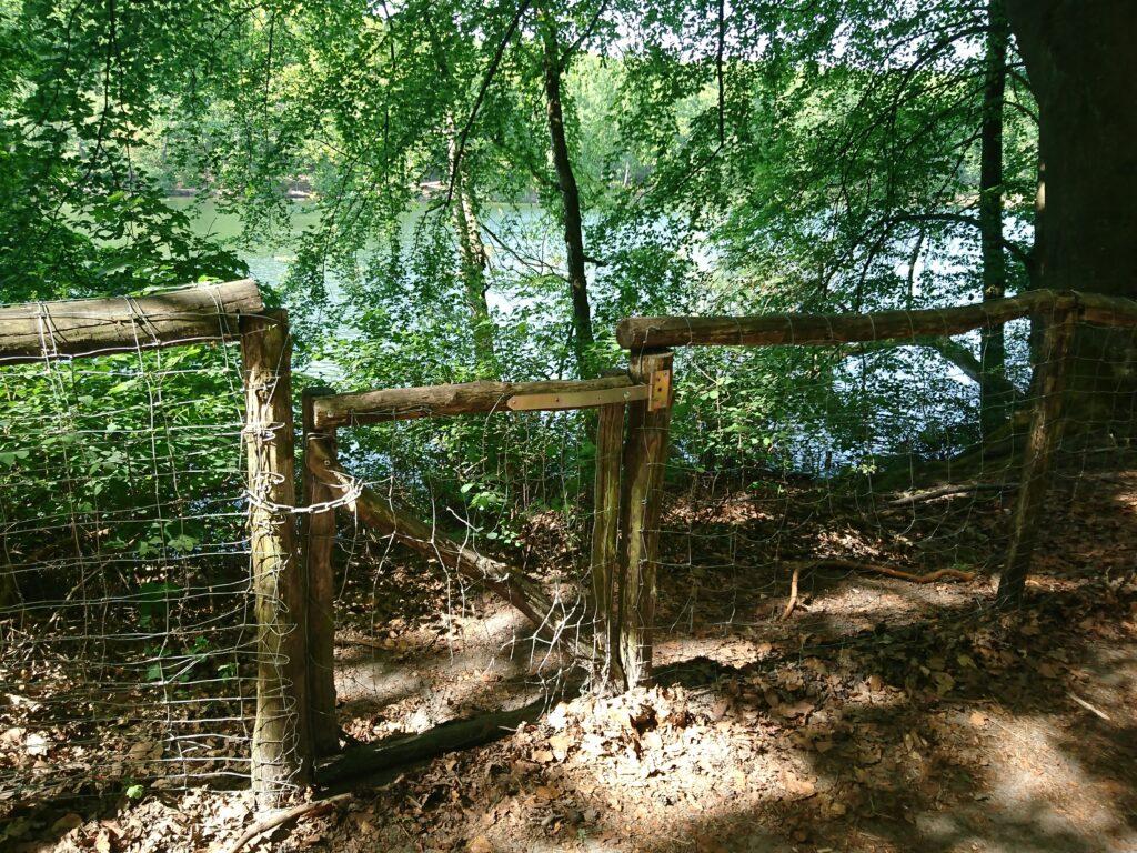 Krumme Lanke im Frühsommer, Viel Wald  und da hinter der See,